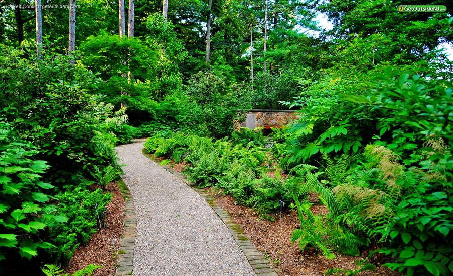 Frelinghuysen Arboretum 353 East Hanover Avenue