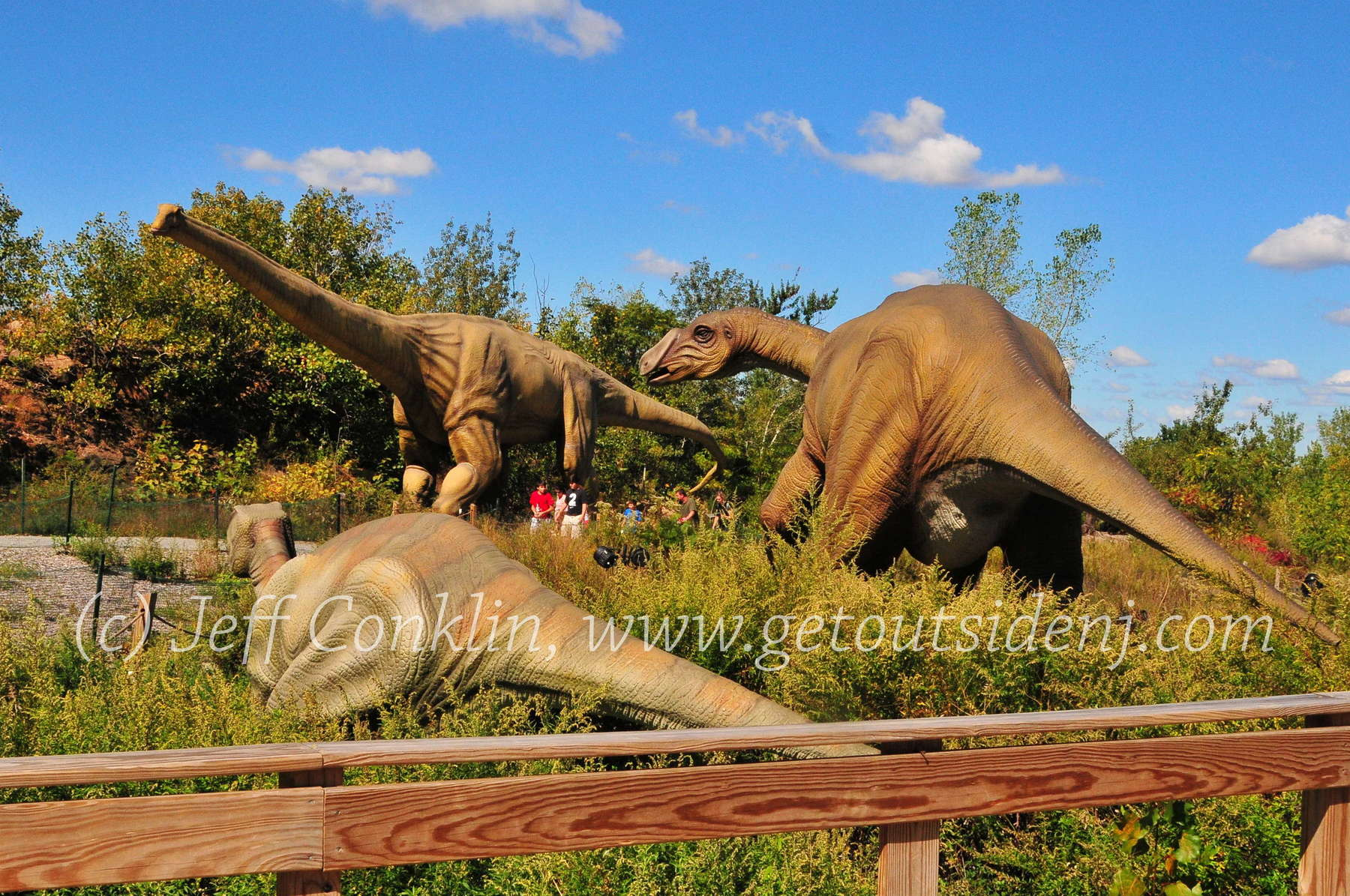 Field Station Dinosaurs 40 Fort Lee Rd Leonia Nj